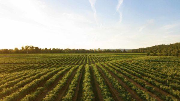 Agricultura 4.0: la revolución IoT en el campo español